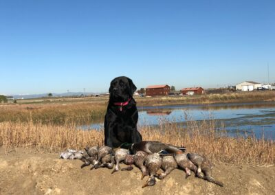 Colorado Early Duck Hunting