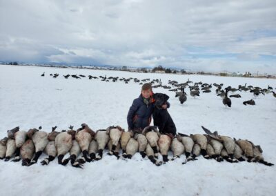 Limits Colorado Goose Hunting