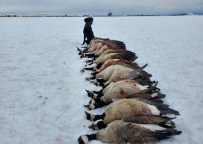 Oliver Colorado Goose Hunting